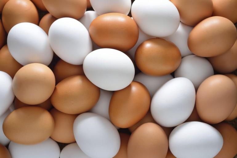 salg af æg