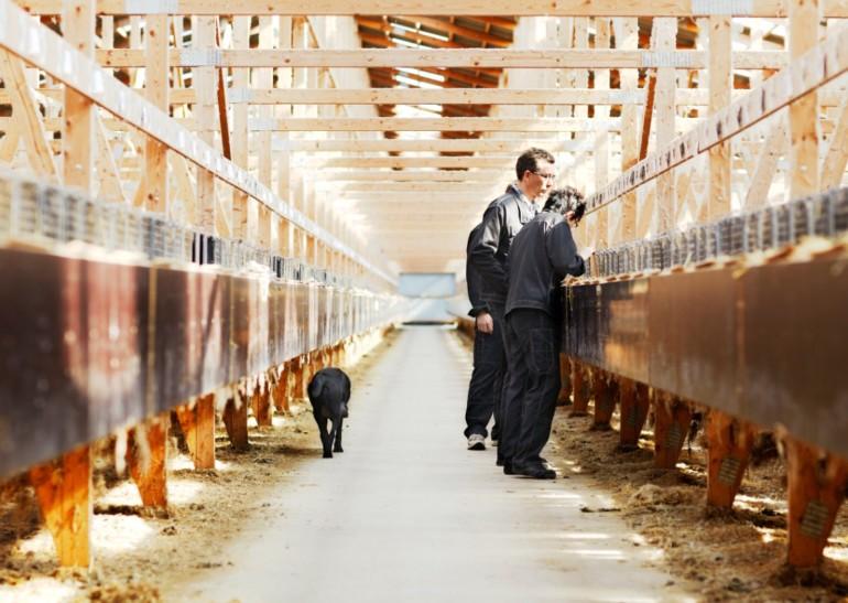 Milliardaftale om mink-kompensation på plads