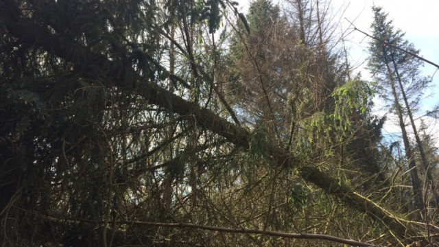 Væltet skov 1